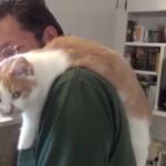 お皿洗いを見守るにゃ!肩にぶら下がってご主人を応援する猫