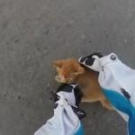危ない!!!交差点に迷い込んだ子猫を助ける優しき女性ライダー