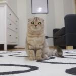 スタミナと元気をチャージするにゃ!遊び疲れを充電で解消するロボット猫