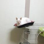 ケージの上で絶妙なバランス感覚を発揮する猫