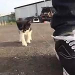 どこまでもついていきますにゃ!歩みを止めるたびに後ろから追いかけてくる激かわな子猫