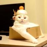 斬新なお正月コスプレ!一家に一匹欲しいほど愛らしい猫鏡餅