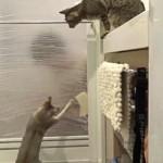 掃除が癒しの時間に!お風呂場で猫ダンスを披露するにゃんこたち