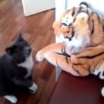 絶対負けないにゃ!大きなトラのぬいぐるみと格闘する強気な猫