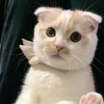 キュートさ満載!!大好きな飼い主にかまってアピールをする甘えん坊猫