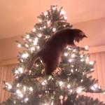 てっぺんを目指すにゃ!きらびやかなクリスマスツリーを慎重にのぼるイタズラ子猫