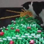 これは斬新!ドミノで創られた3Dクリスマスツリーを楽しむ猫