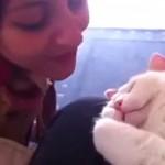 まさに相思相愛!可愛らしい鳴き声で飼い主さんのキスに返事をする猫