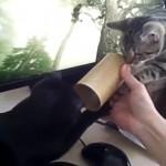 ただの筒でも猫にとっては楽しいオモチャ!一生懸命だけどどこか可笑しな2匹の猫