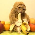 今年も猫年炸裂にゃ!今年の干支であるお猿さんに大変身したコスプレにゃんこ