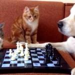 チェスを楽しんでいる猫と犬の邪魔するいたずらにゃんこ