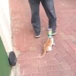 狭い缶の中から頭が抜けなくなった猫の心温まる救出劇