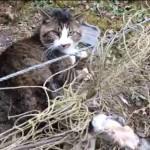 緊張感MAX!!イノシシ避けの縄に絡まった猫の救出劇