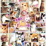 【祝*猫の日】ねこ好き必見!!Twitterで話題の人気猫アカウント50名を一挙大紹介