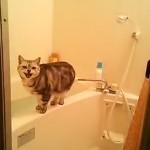 お風呂場で飼い主の盗撮に気づきユーモラスな鳴き声を出す猫