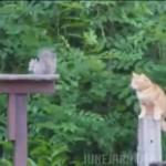こんなはずじゃにゃかった!!リスを狙う猫に訪れた予想外の悲劇