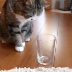 【実験】愛猫の利き手をコップとカリカリで調べよう