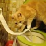 綺麗な片付け術にも注目!自分が散らかしたトイレットペーパーで便器の目隠しをする猫