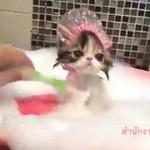 泡風呂を優雅に堪能するシャンプーハットにゃんこ