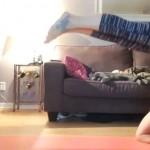 ヨガ中にハプニング発生!寝起きに野生の本能を見せつける猫たち