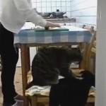 生地はこうこねるにゃ!飼い主にパン作りのお手本を見せる猫
