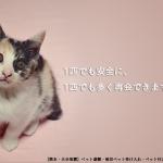 【熊本・大分地震】ペット避難・被災ペット受け入れ・ペット行方不明等の情報まとめ