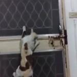 鍵のかかった玄関からこっそりと脱出を試みるスパイにゃんこ