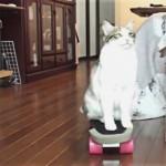 ドヤ顔にも注目!ニャン生初のスケボーに挑戦するアクティブ猫