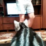 飼い主さんの妨害にもめげないテレビ大好きにゃんこ