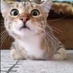くるくる変わる表情に注目!もしも猫がホラー映画をみたら!?