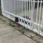 フェンスに頭がハマった黒猫を救助!アニマルレスキューのプロ技に感心