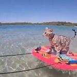 スキムボードを乗りこなしてマリンスポーツを楽しむ猫