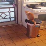 ゴミ箱の上からダイナミックな方法で外出するにゃんこ