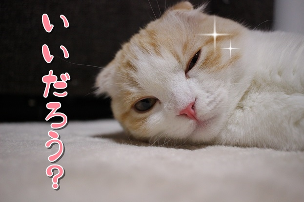 "IMG_3182<img class=""ranking-number"" src=""https://nekonavi.jp/wp-content/themes/jin/img/rank01.png"" />"