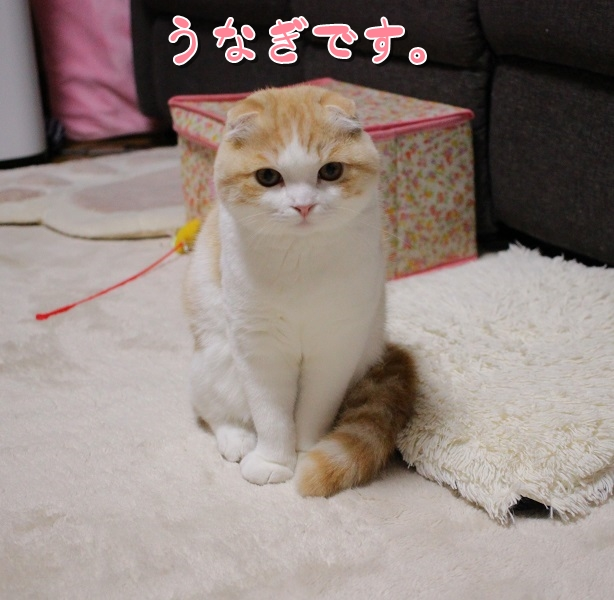 "IMG_3952<img class=""ranking-number"" src=""https://nekonavi.jp/wp-content/themes/jin/img/rank01.png"" />"