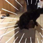 予想外のハプニングで段ボールの中に飲み込まれていく黒猫