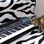まるで天才作曲家!?スリスリしながらピアノを演奏するアーティスト猫
