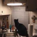 ラストのオチに注目!蛾を捕まえたい黒猫が起こす意外なハプニング