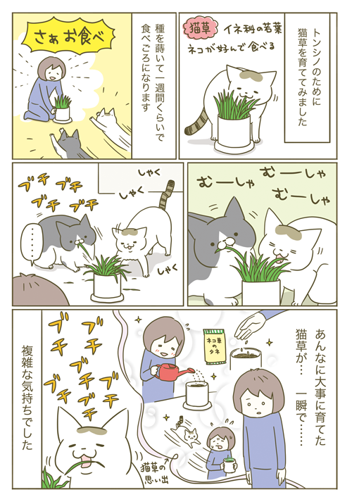 1P-猫草1