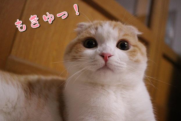 "IMG_4179<img class=""ranking-number"" src=""https://nekonavi.jp/wp-content/themes/jin/img/rank01.png"" />"