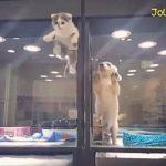 深い愛に驚愕!犬猫界に表れた「ロミオとジュリエット」
