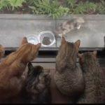窓の外にやってくる野良猫を優しく見守る飼い猫たち