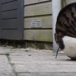 器用な前回り姿がコミカル!やわらかい体でくるりんぱを楽しむ猫