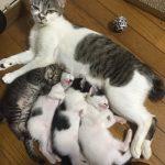 拾った猫は妊婦だった!4匹の子猫を愛情深く育てる肝っ玉母さん猫