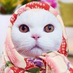 愛猫が喜ぶキャンペーンもあり! 「ねこ巻き巻きメーカー」で愛猫のキュートすぎるオリジナル巻き巻き姿を作成しよう!