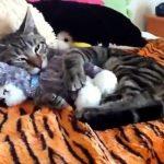 愛情表現は十二十色!テディベアの魅力に取りつかれた猫たち