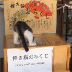 ご利益間違いなし!?人気の猫スポット「御誕生寺」でおみくじに招かれたリアル招き猫
