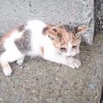 橋から落ちた半身不随の保護子猫と先住猫の奇跡の1年