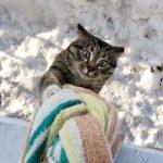 タオルの使い方に驚き!エネルギッシュな猫の斬新すぎる帰宅方法