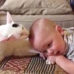 最強の組み合わせ!赤ちゃんの頭をぺろぺろ優しく舐める猫